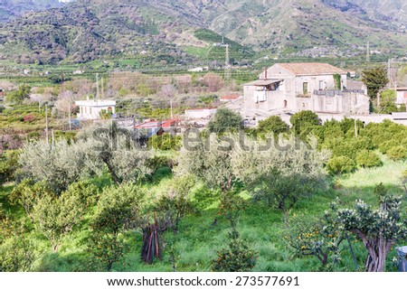 citrus orcahard in backyard of urban house on outskirts of town Gaggi in green hills in spring day, Sicily, Italy - stock photo