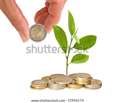 Citrus sapling growing from coins - stock photo