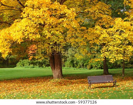 City park in autumn - stock photo