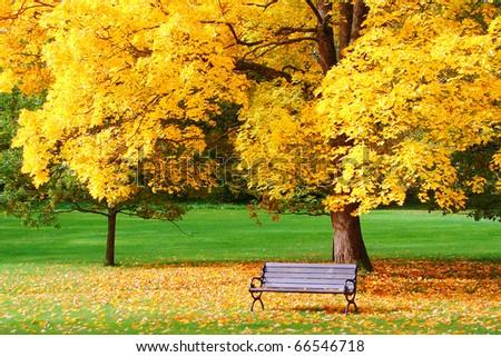 City park in autumn - stock photo