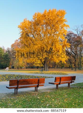 City park in autumn - Sad Janka Krala - stock photo