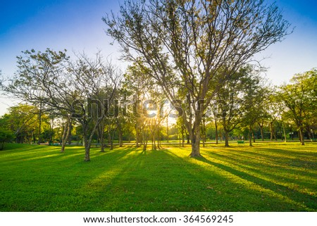 City park under blue sky sun light with big old tree - stock photo