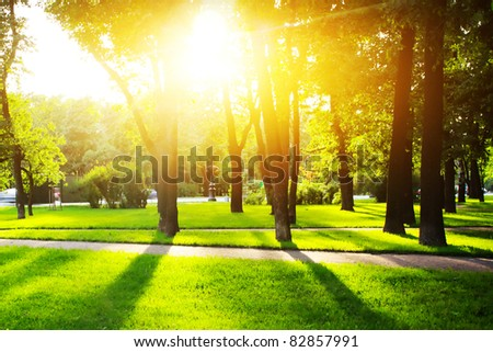 City park with green grass and trees at sunset light - stock photo