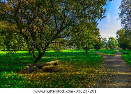 City Park with Road and Branchy Trees on Green Grass in Fallen Foliage - stock photo