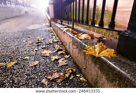 City street at night with trees,leaves on the ground and lamppost - stock photo