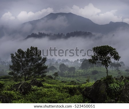 Ciwidey, Bandung, West Java, Indonesia - October 22, 2016 : The tea plantations of Ciwidey with the mountains in the background