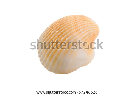clam on a white background - stock photo