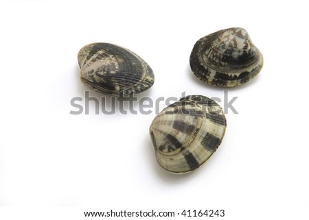Clam-vongole - stock photo
