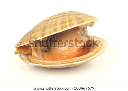 Clams on a white background  - stock photo