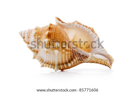 clamshell on a white background isolated - stock photo