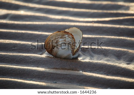 Clamshell on beach