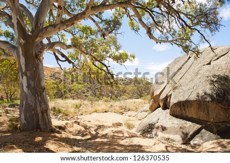 Classic Australian outback bush scenic with huge gum tree's in a dry river bed - stock photo