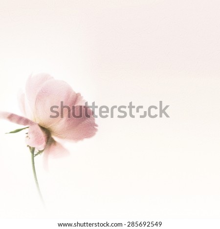classic color roses in soft color style on mulberry paper texture for background - stock photo