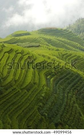 classic rice terraces - stock photo