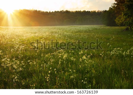 classic summer morning sunrise in latvian meadow - stock photo