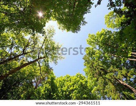 classic view of green tree branches and sunny sky - stock photo