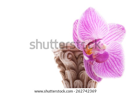 Classical column with flower isolated on white background, conceptual metaphor for love, stable relationship, and affection. - stock photo
