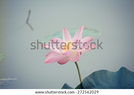 classical flower--season view - stock photo