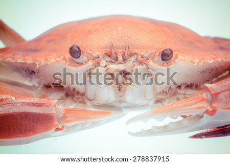 classical food--crab - stock photo