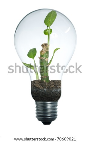 Classical light bulb with plant in its, clipping path included - stock photo