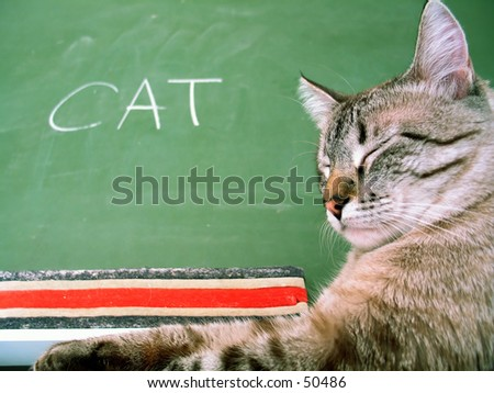 Classroom chalkboard with the word cat, a cat sitting next to the board. - stock photo