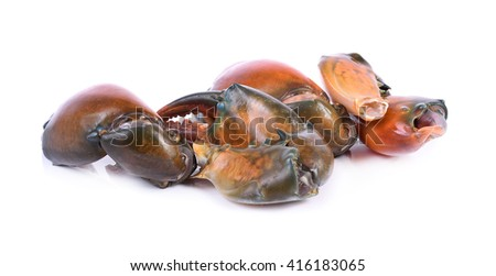 claw black crab in isolated on white background