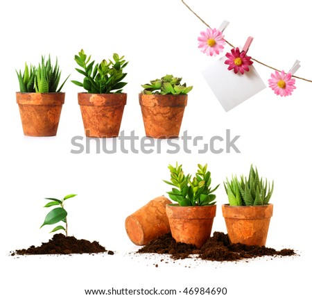 Clay pots with herbs on white background - stock photo