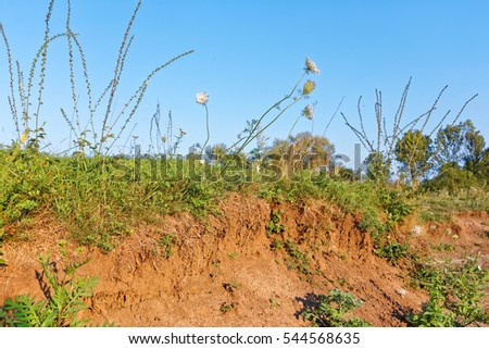 Clay soil covered with herbs in summertime