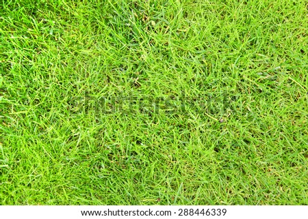Clean Beautiful Background Green grass. - stock photo
