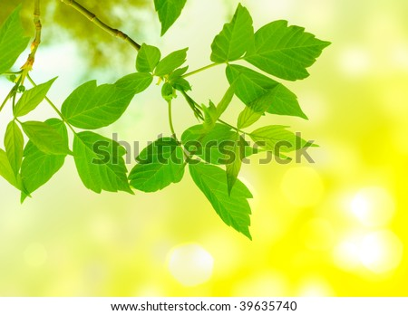 clean green leaves, shallow focus