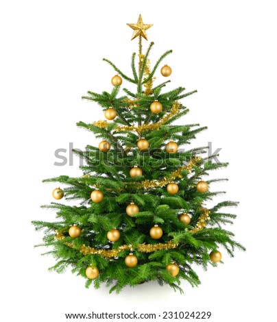 Clean studio shot of a very nice natural Christmas tree decorated with gold baubles and garland, isolated on white - stock photo