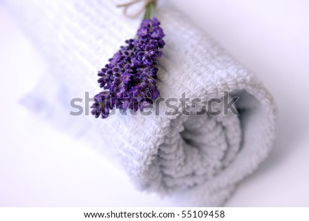 Clean towel with fresh lavender flowers, slightly purple toned - stock photo