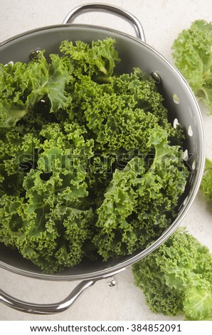 cleaned and wet curly kale in a colander - stock photo