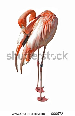 cleaning flamingo