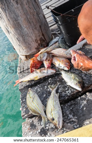 Cleaning just catched fish on wooden pier, closeup  - stock photo