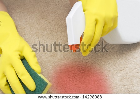 cleaning red stain on a carpet with a sponge - stock photo