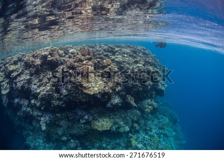 Clear, blue seawater bathes a remote coral reef in the Solomon Islands. This beautiful region is the easternmost part of the Coral Triangle and harbors high marine biodiversity.