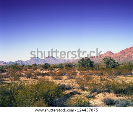 Clear blue sky and desert mountain with saguaro cactus - stock photo