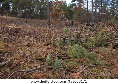 Clear cut pine tree forest with leftover branches, pine needles and stumps, neighboring land and trees in background - stock photo