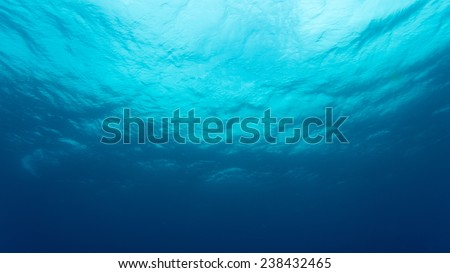 Clear view of the ocean from beneath. A dark cold place in temperate waters. This water is not tropical and hence is much darker than tropical waters. Its the southern ocean.  - stock photo