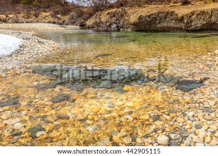 Clear water in the roar landscape concept - stock photo