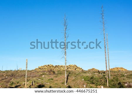 Clearcut area with timber in heaps - stock photo