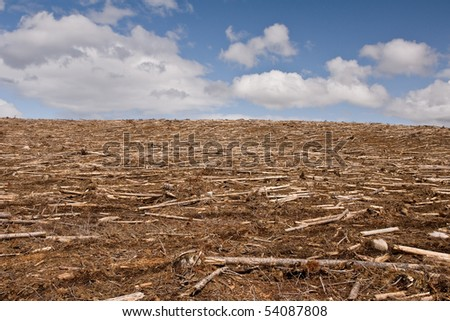 Clearcut forest - stock photo