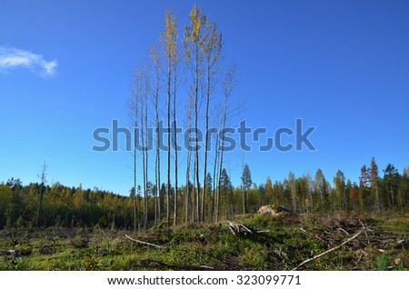 Clearcutting area in forest.  - stock photo