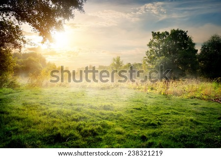Clearing in the forest in sunny summer morning - stock photo