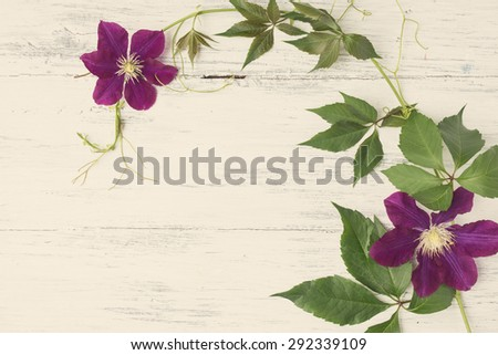 Clematis flowers with green leaves on wooden background.