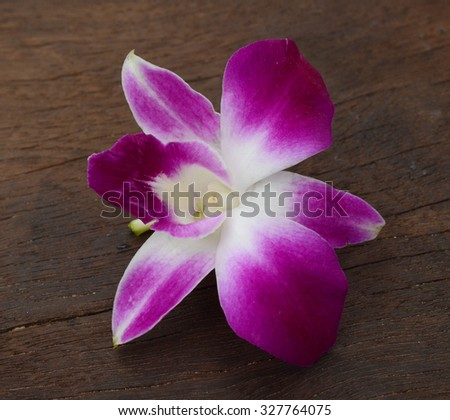 clematis on wooden background  - stock photo