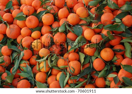 Clementines with leafs. - stock photo