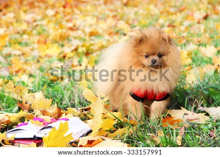 Clever dog with book. Pomeranian dog in autumn park with book.