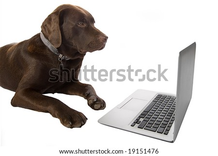 Clever Doggy using Laptop
